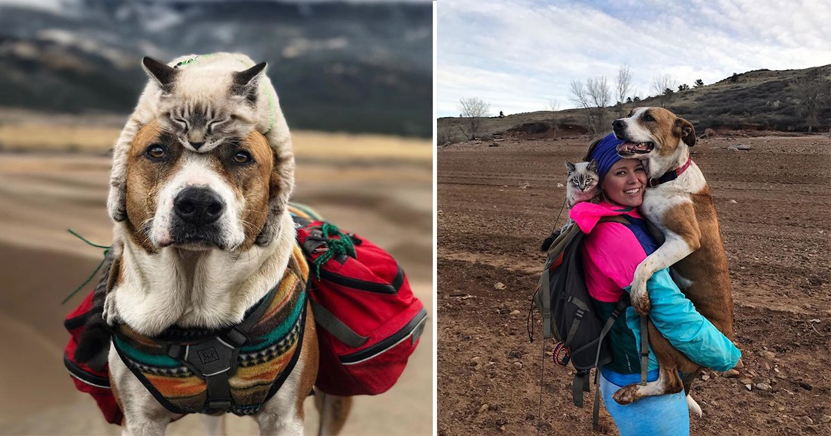 ec8db8eb84ac12 3 - This Cat And Dog Duo Living Their Life To The Fullest As They Travel Together