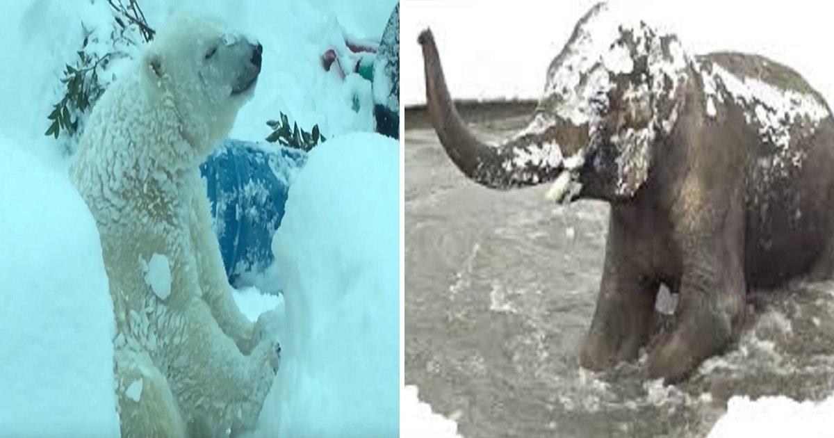 ec8db8eb84ac12 6.jpg?resize=1200,630 - Elefante de um zoológico fica assustado ao ver a neve... Mas, sua reação a seguir vai amolecer o seu coração!