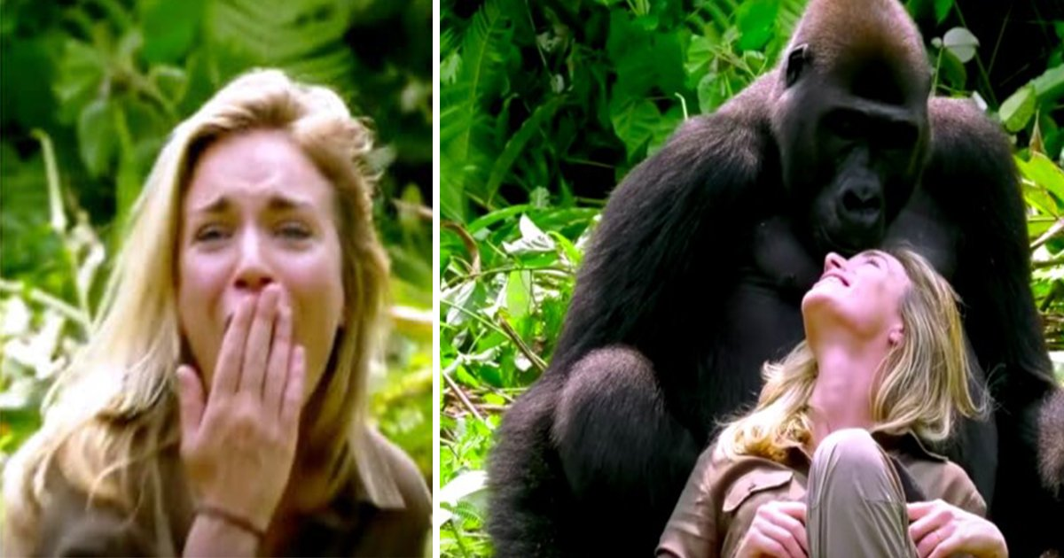 ec8db8eb84ac15.jpg?resize=1200,630 - Veja o que acontece quando homem que criou gorilas selvagens quando bebês apresenta sua esposa a eles