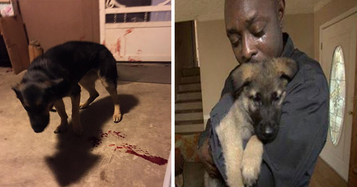 ec8db8eb84ac20 - Dog Jumps on Owner, Takes Bullet While Protecting Her from Gunfire