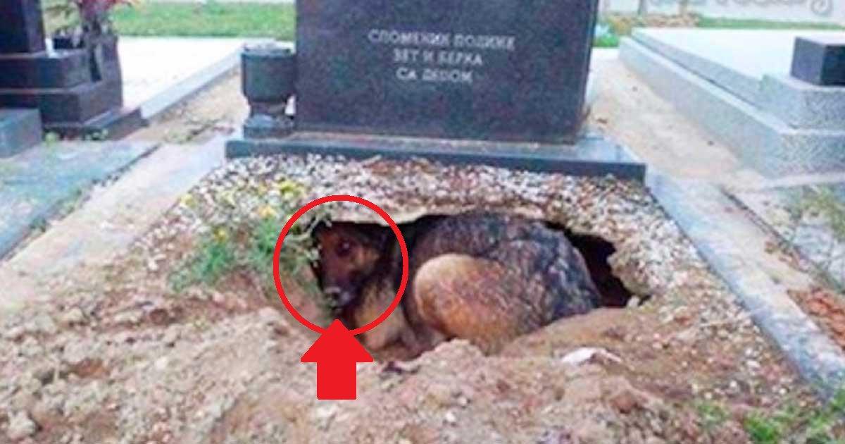 eca09cebaaa9 ec9786ec9d8c 126.png?resize=636,358 - Cachorro dormia em cima do túmulo de seu falecido dono, mas havia um motivo inacreditável por trás desse ato