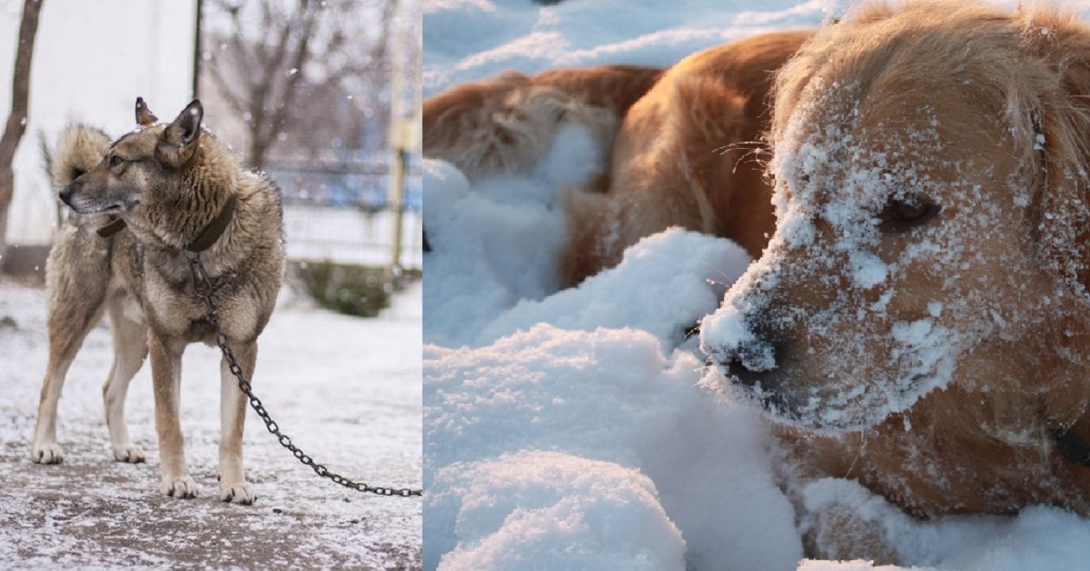 eca09cebaaa9 ec9786ec9d8c 54 - New Law Forbids Dogs To Be Kept Outside In Severe Cold