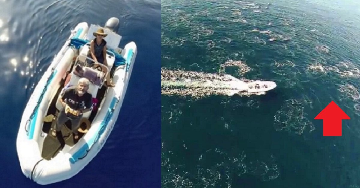 eca09cebaaa9 ec9786ec9d8c 79 - Man's Drone Captures Extremely Rare Footage of Dolphin Stampede From The Ocean