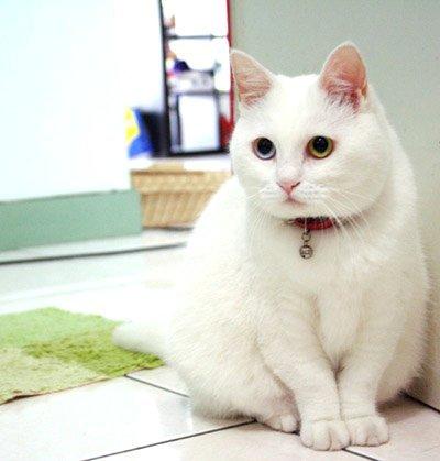 efbc93 6.jpg?resize=1200,630 - 特徴や性格は?日本猫の種類まとめ