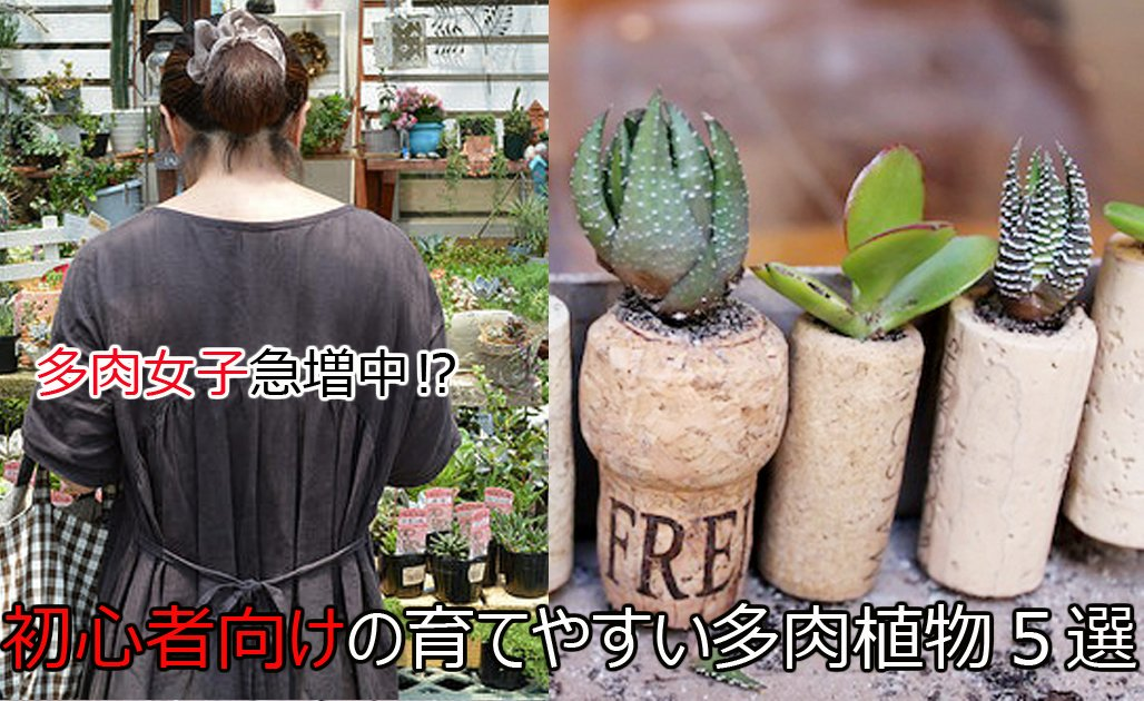 f3f43dd172dab5f37cd466af66799eca 2.jpg?resize=1200,630 - 初心者でも大丈夫!育てやすい多肉植物5選