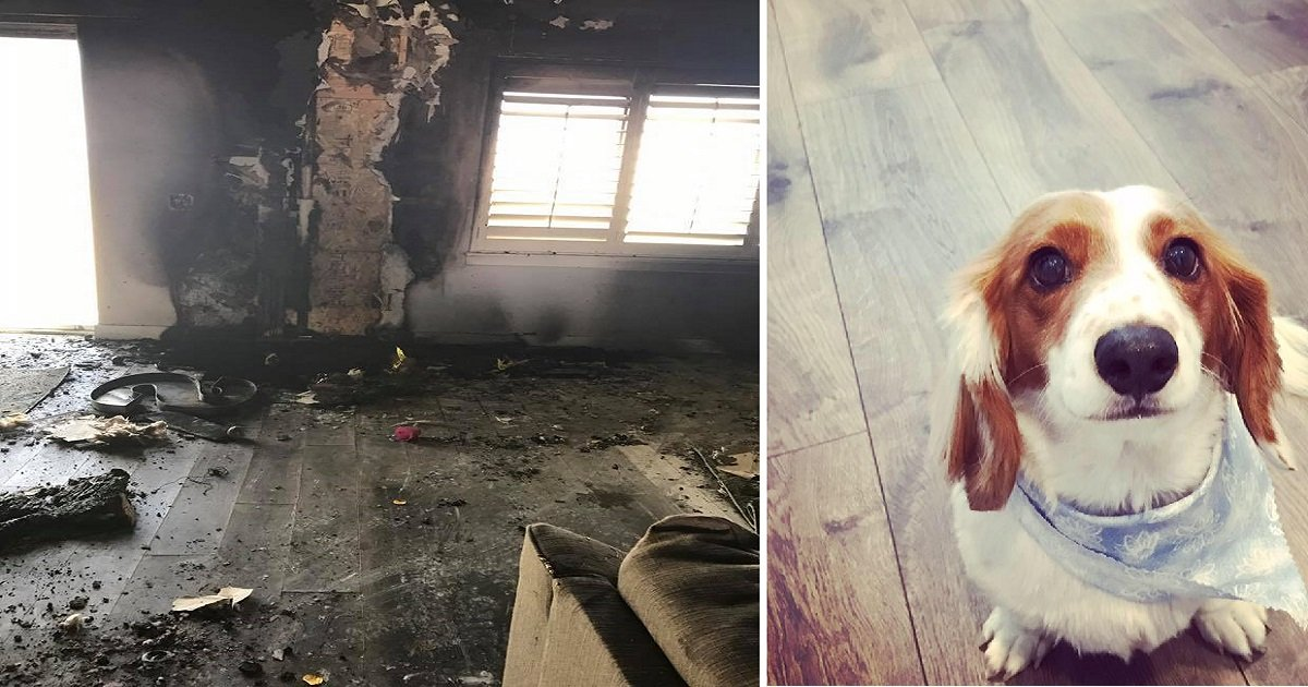 fire destroys house kills dog 5 1 - The Family Lost Their Dog In Burning House, And Soon After, They Got Another Dog