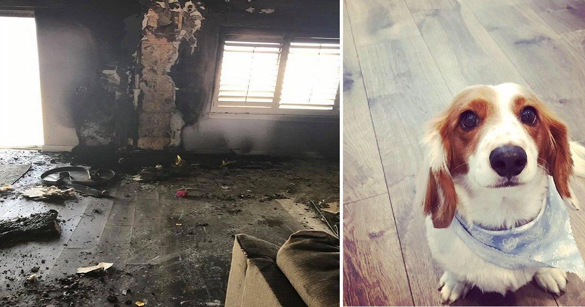 fire-destroys-house-kills-dog-5