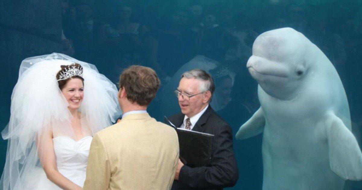funny wedding photobombs 205 5a016cbd8a616  700 1.jpg?resize=300,169 - 사랑스러운 웨딩 사진을 망친 훼방꾼들 (사진)