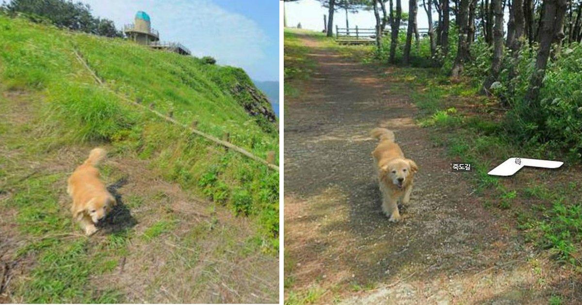 googlefin.jpg?resize=412,232 - Cachorro segue o mapeador do Google Maps e pode ser visto em todas as fotos do local