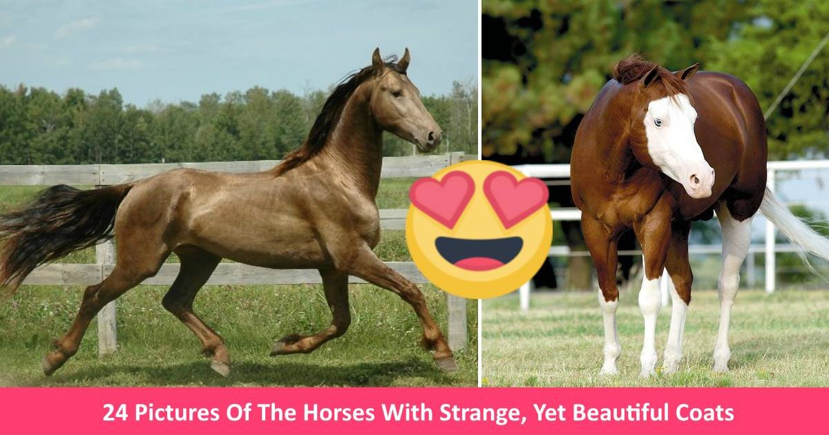 horsies - 24 Pictures Of The Horses With Strange, Yet Beautiful Coats