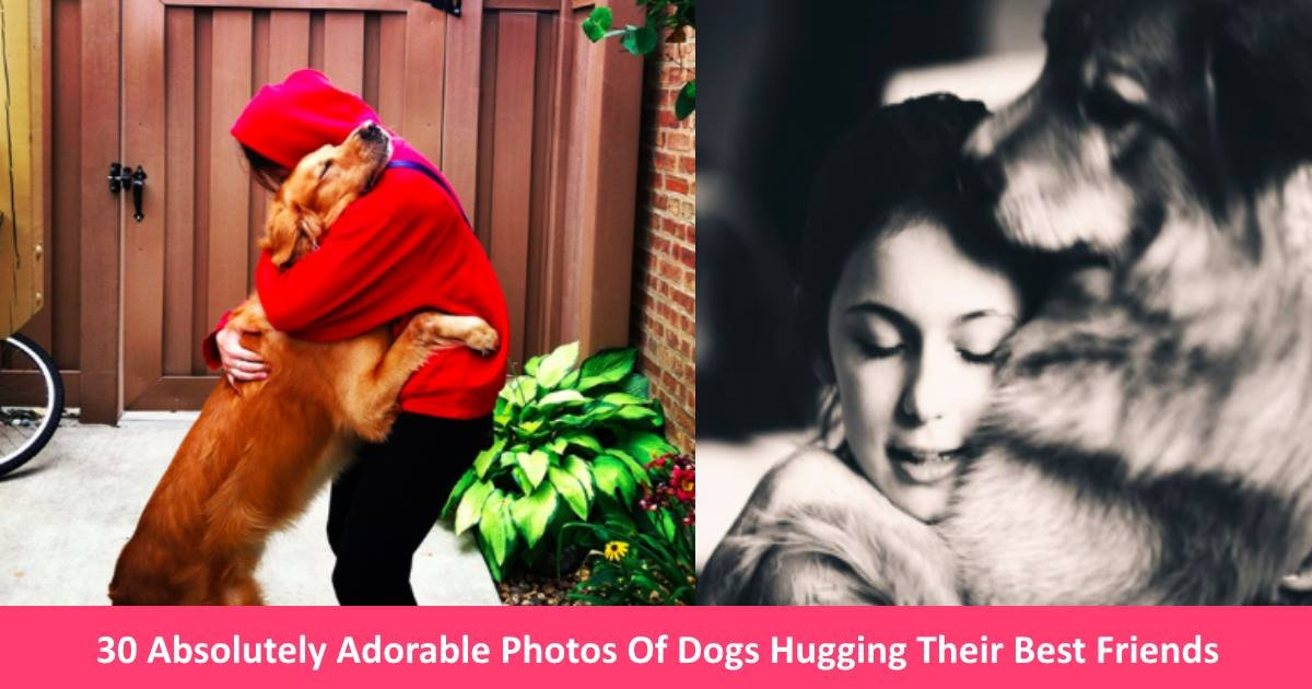 huggingdogs - 30 Absolutely Adorable Photos Of Dogs Hugging Their Best Friends