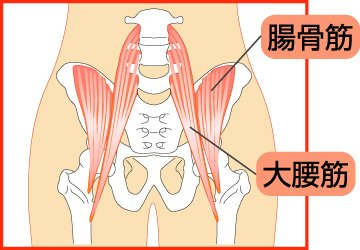 Image result for 腰痛 大腰筋 ストレッチ