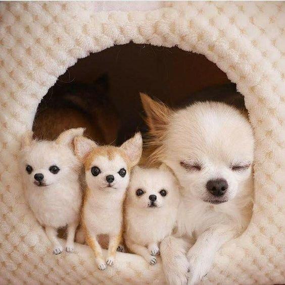 img 5a2b267e18f93 - 養狗能讓生活幸福感大增?5個原因告訴你為什麼