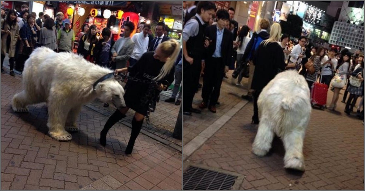 img 5a3bbd86326f4.png?resize=412,232 - 東京にシロクマを連れた美女が現れた?