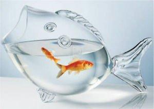 img 5a3bd85a6ee18.png?resize=1200,630 - お祭りの定番!金魚のまめ知識