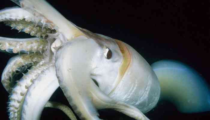 korean-womans-mouth-gets-impregnated-with-squid-babies-2