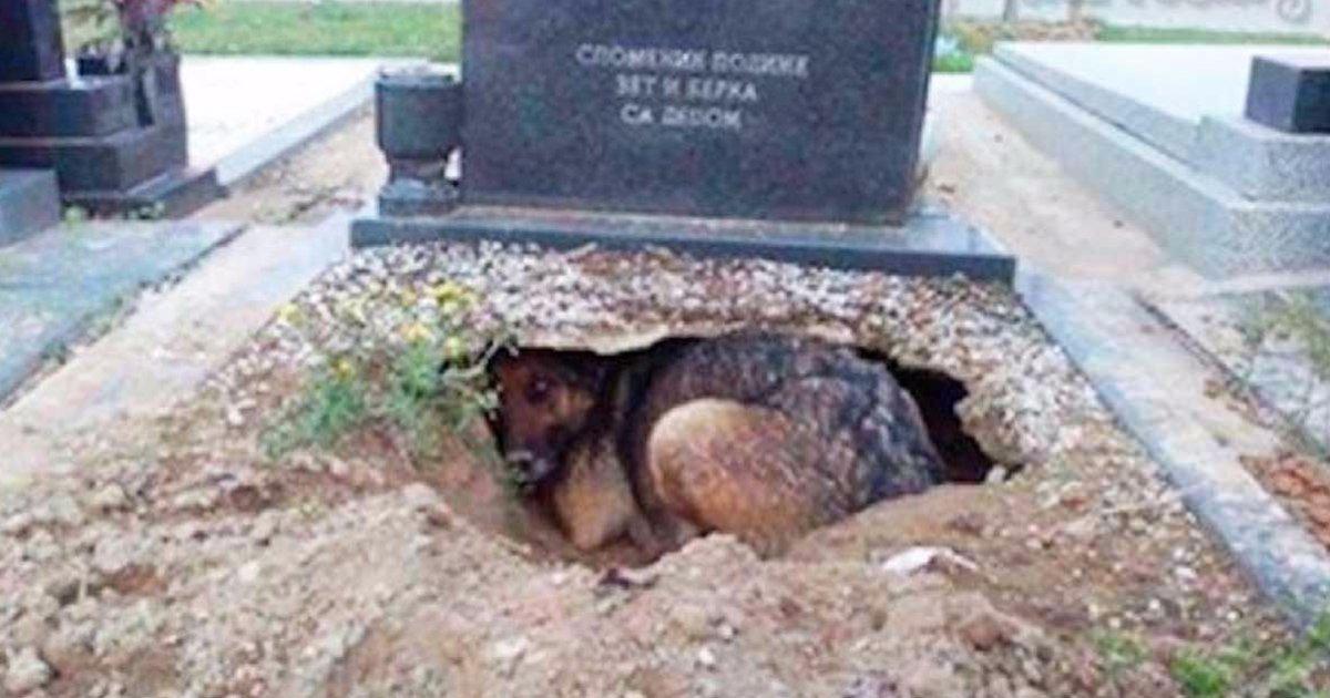 mainphoto chientombe - Cette chienne réfugiée sur la tombe de son maître cachait en réalité quelque chose.