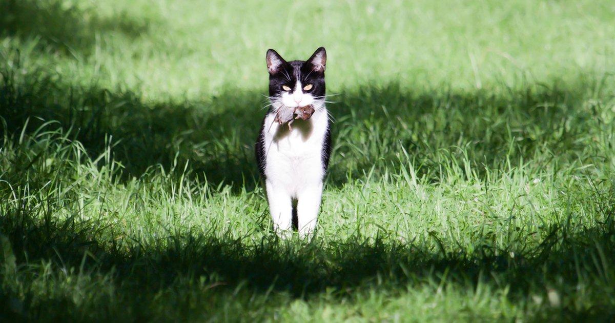 mainphoto maraicher.jpeg?resize=412,232 - Ce maraîcher adopte des chats pour sauver ses cultures des rongeurs
