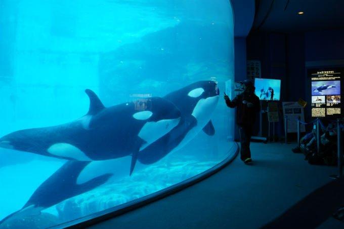 名古屋港水族館에 대한 이미지 검색결과