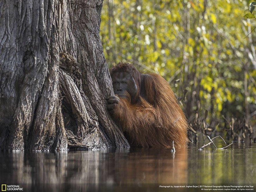 Crédits photo : National Geographic / Jayaprakash Joghee Bojan
