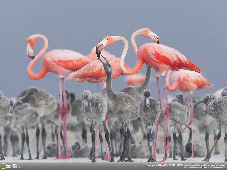 Crédits photo : National Geographic / Alejandro Pietro