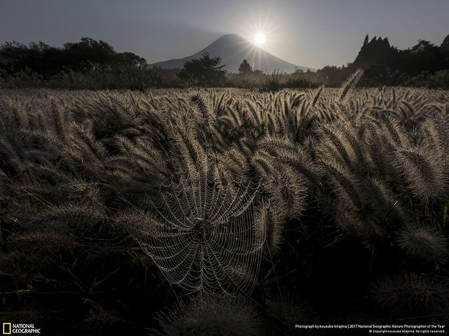 Crédits photo : National Geographic / Kousuke Kitajima