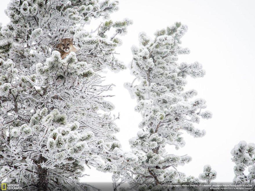 Crédits photo : National Geographic / Melissa Stevens