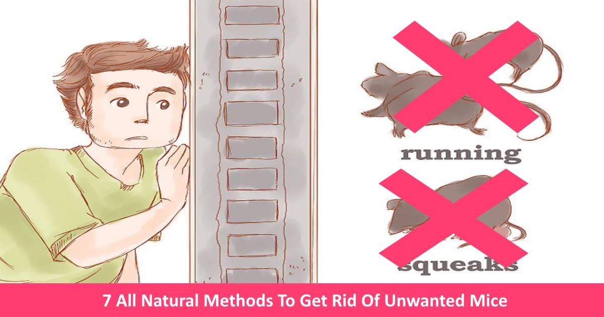 naturalmethods2removemice.jpg?resize=412,232 - 7 All Natural Methods To Get Rid Of Unwanted Mice From Your Home