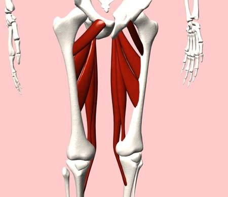 内転筋,痛み에 대한 이미지 검색결과