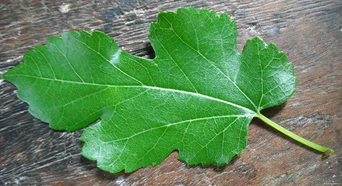 planta-milagrosa-para-mulheres-equilibra-os-hormonios-e-emagrece-1-kg-por-semana