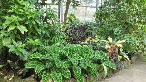 plants_conservatory