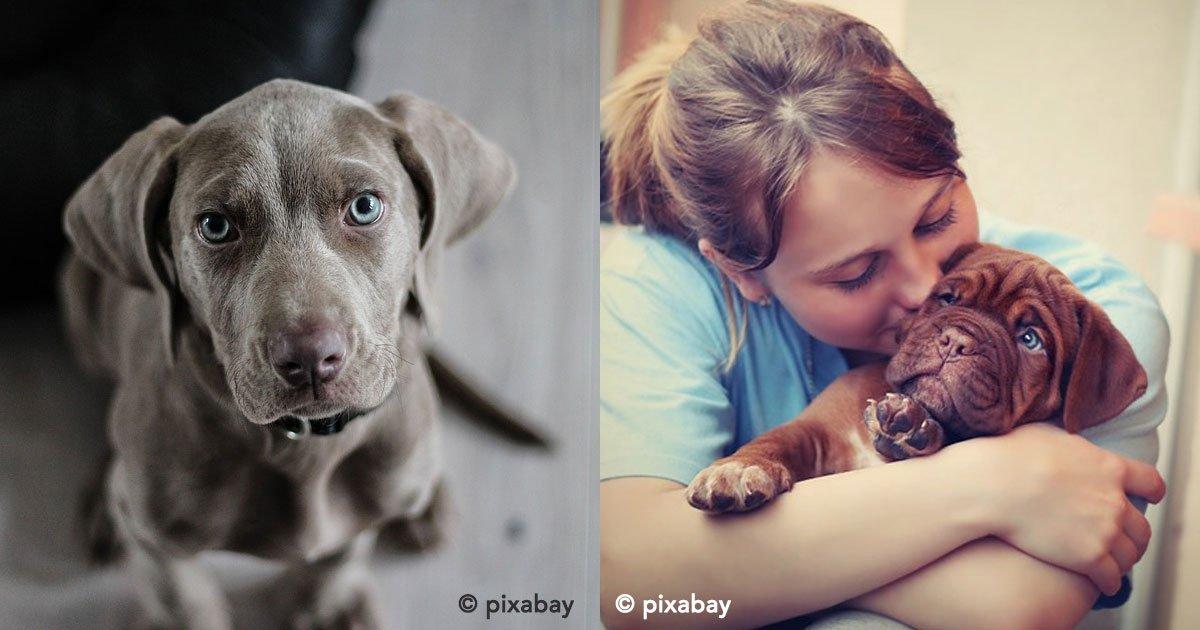 portada 34.jpg?resize=1200,630 - ¡Tener un perro reduce las posibilidades de infarto!