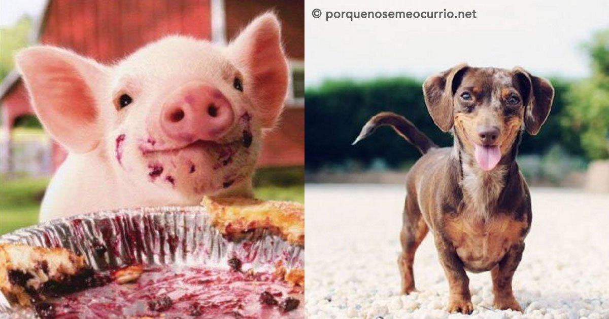 portada 4 - 20 fotografías de animales que muestran que son realmente increíbles