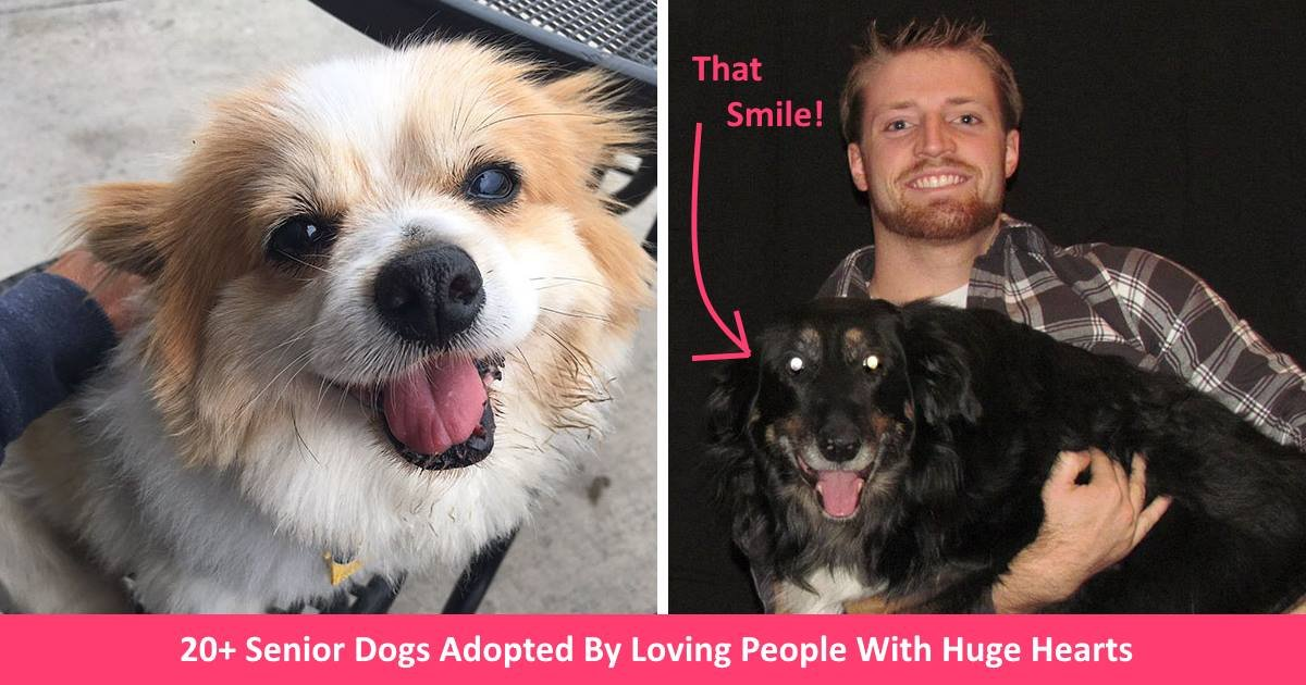 seniordogs.jpg?resize=300,169 - 20+ Senior Dogs Adopted By Loving People With Huge Hearts