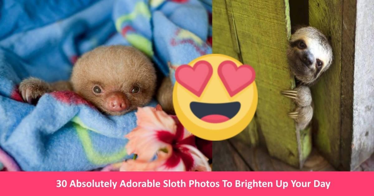 slothcuties