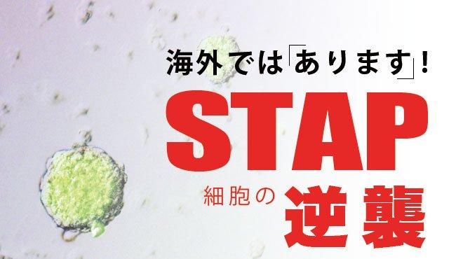 stap細胞에 대한 이미지 검색결과