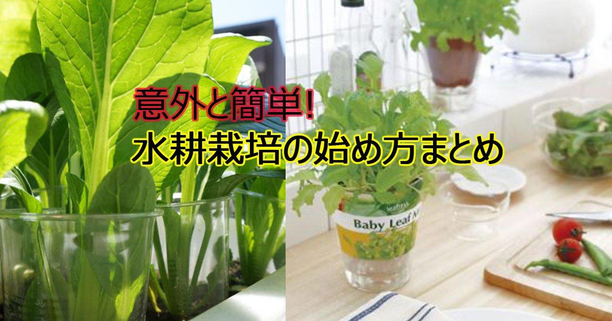 suikousaibai.jpg?resize=1200,630 - 家庭菜園にチャレンジ!簡単手作り水耕栽培まとめ