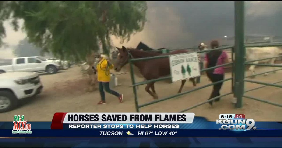 thumb nail reporter - From Reporter To Rescuer, A CBS2 Reporter Saves 50 Helpless Horses From Death