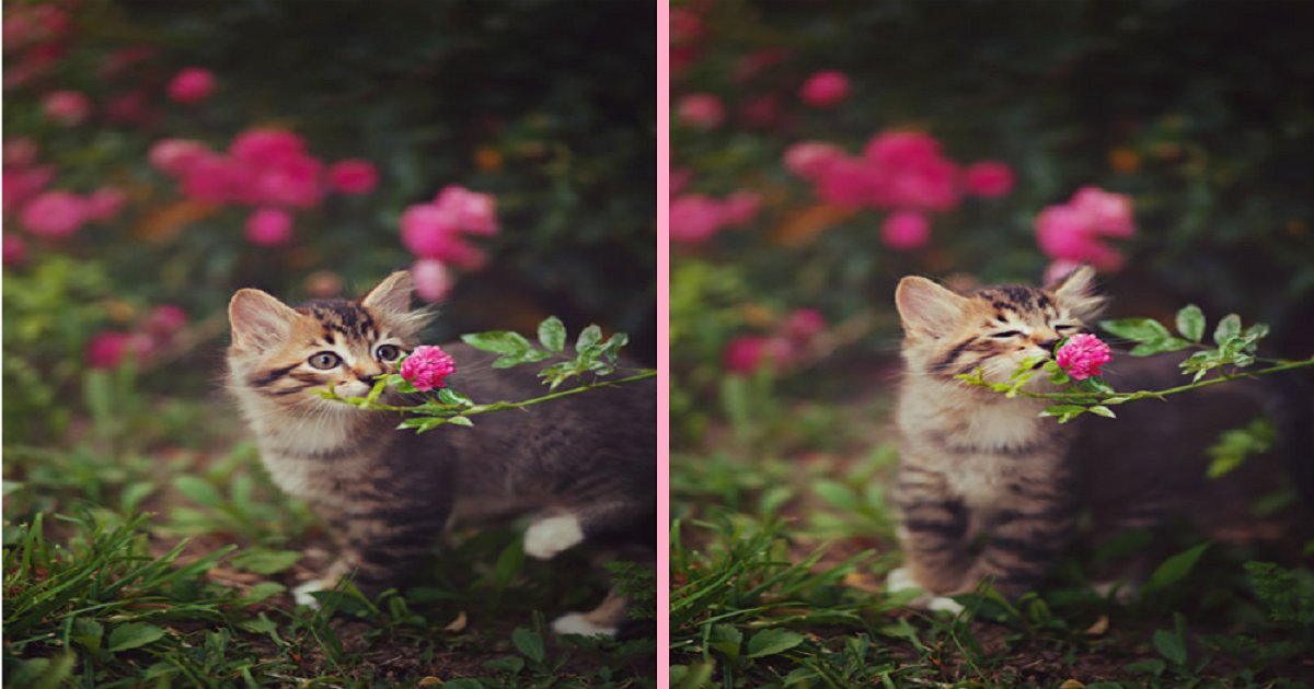 thumb nail sniffing cat.png?resize=300,169 - 30 Photos Of Adorable Animals Smelling The Flowers.