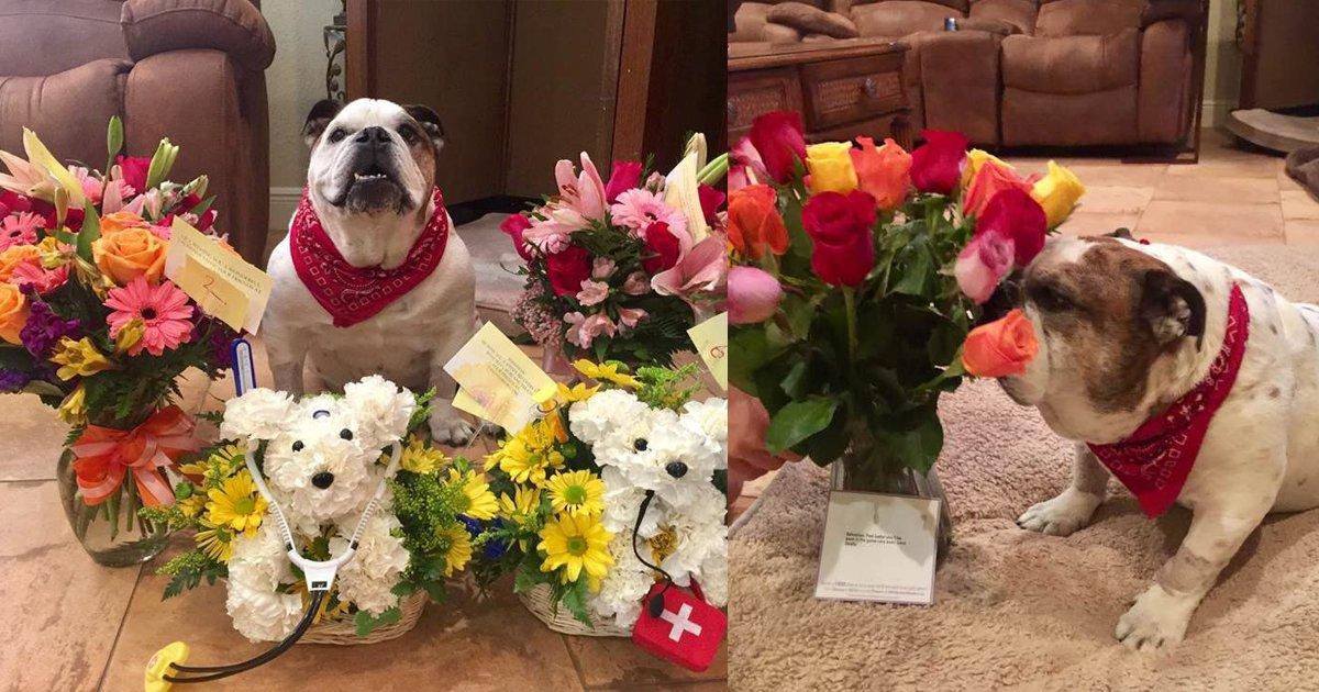 thumbnail5f.png?resize=1200,630 - Mulher fica emocionada ao receber flores do marido... Contudo, elas eram destinadas a outro morador da casa!