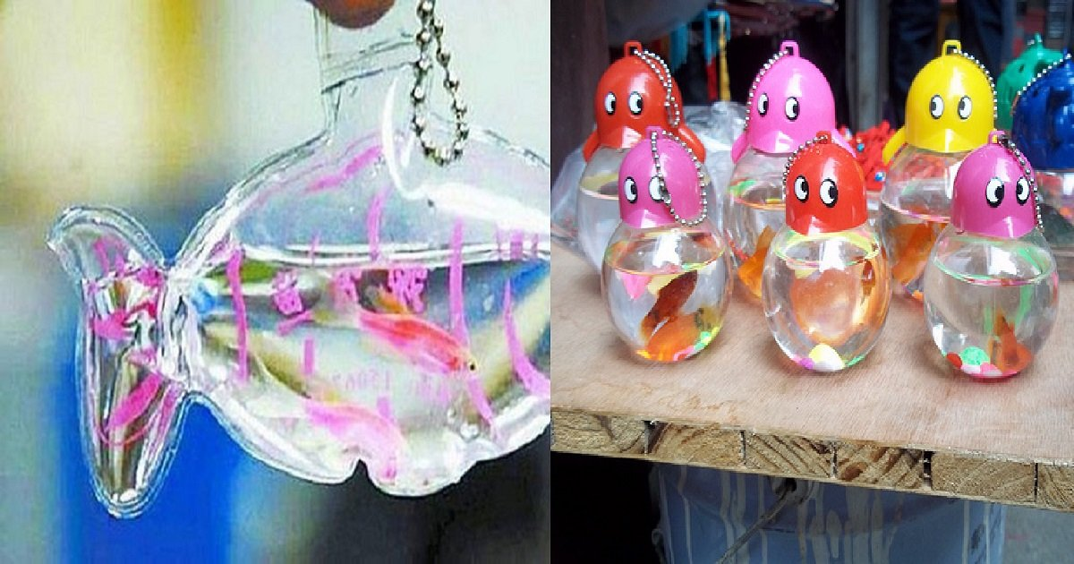 u5ds4bz1wevldxxg8het3jhnqrwkarx 1680x8400.jpg?resize=300,169 - Na China, animais vivos são colocados dentro de embalagens de plástico e vendidos como chaveiros