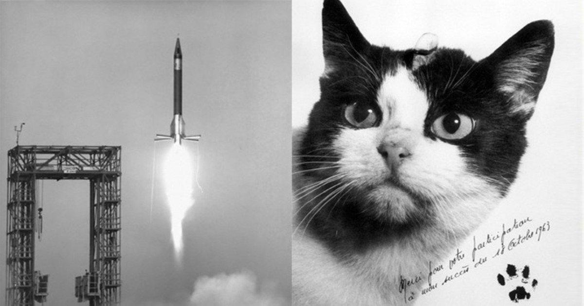 u5q06l48d93203i64y2h.jpg?resize=1200,630 - 역사상 최초로 우주 비행한 '고양이'의 최후