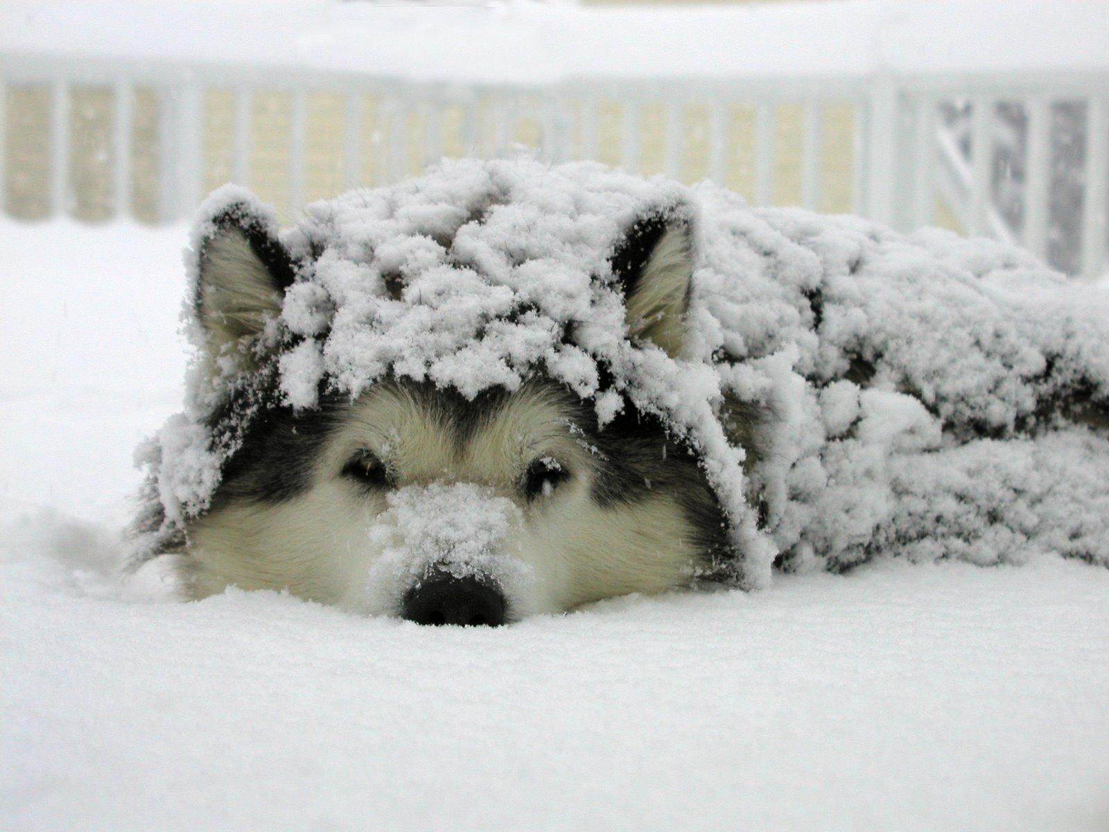 wwnkdxk.jpg?resize=1200,630 - Nova lei nos Estados Unidos proíbe que cães sejam mantidos fora de casa em dias de frio intenso