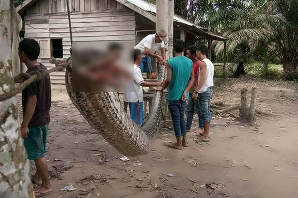 1 daily mirror 1.jpg?resize=636,358 - Homem luta contra uma serpente de 7 metros que bloqueava a estrada
