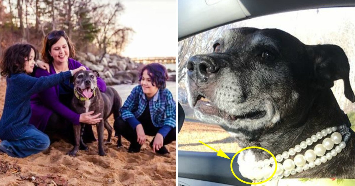 13ec8db8eb84ac - A Family Adopts a Senior Dog Suffering from Cancer and Treats her like a Princess until her last Breath