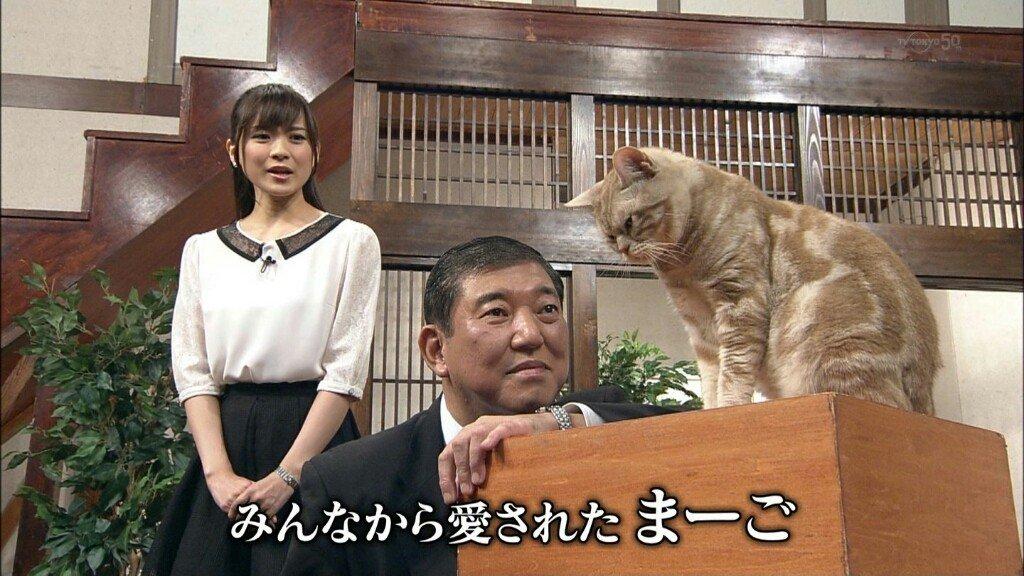1424 1.jpg?resize=1200,630 - テレ東のニュース番組で好き勝手に動く猫「まーご」が可愛すぎる!