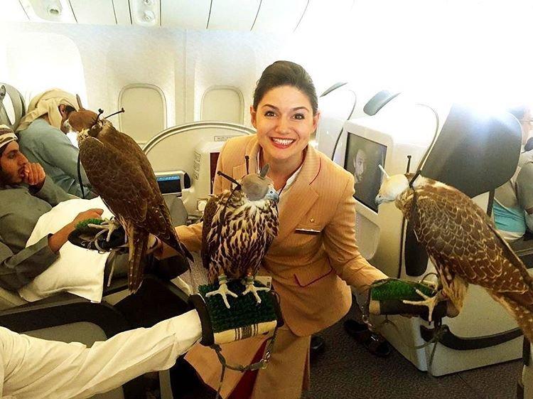 1ff1de774005f8da13f42943881c655f - 28張與眾不同的杜拜日常生活照!#19想變成鳥,來這就對了!