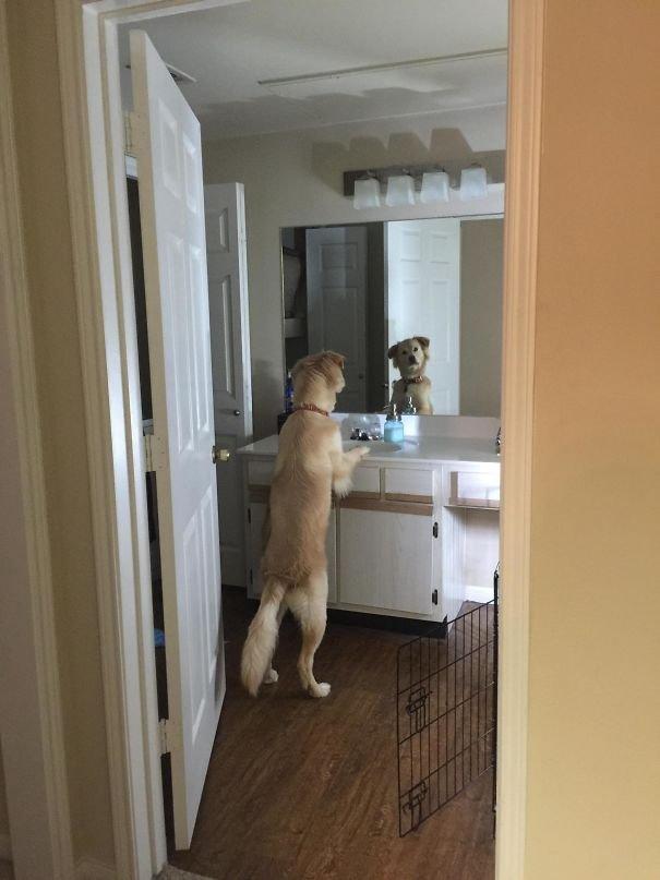 My Dog Contemplating Life