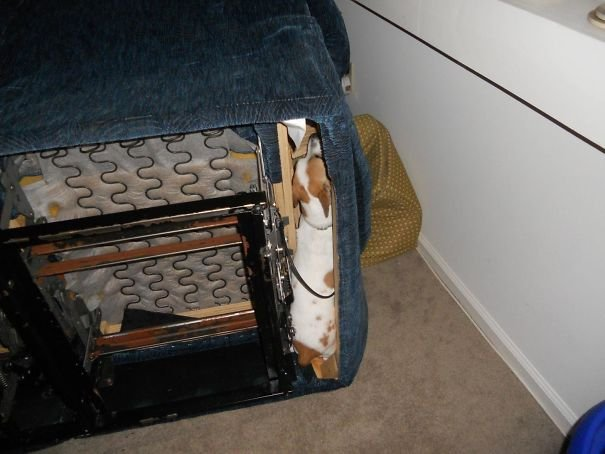 Our Dog Was Hiding Under The Sofa, So We Had To Turn It On It