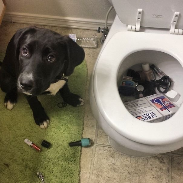 Dog, Why Do You Do This?